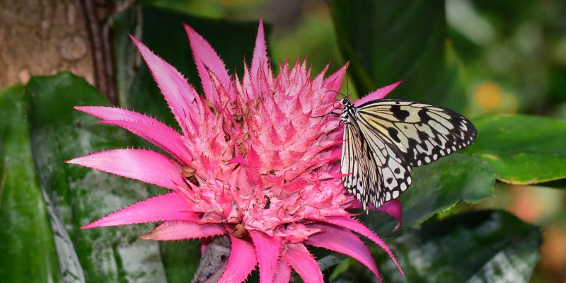 Interesting facts about Bromeliads